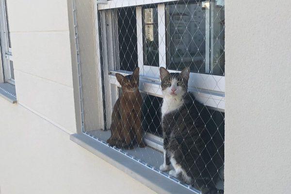 red-para-gato2-happynets